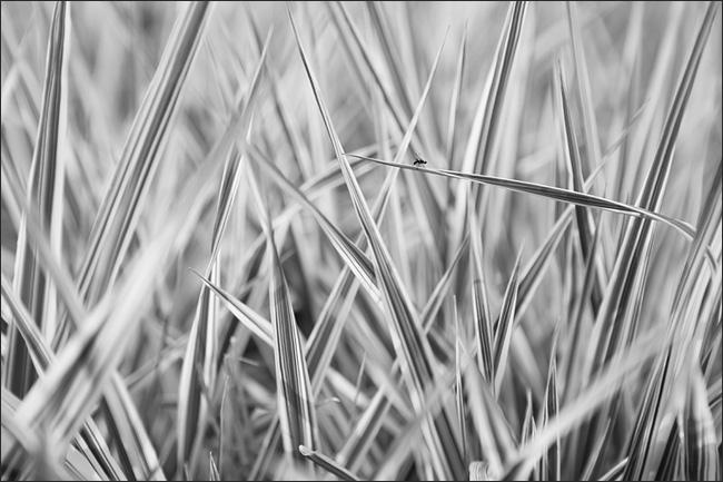 iarba.jpg