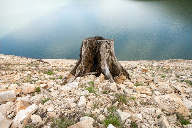 copacul_lipsa.jpg